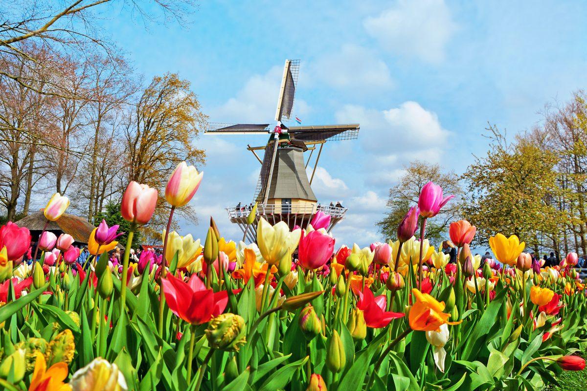 gratis kaartje bloemen en pakketten Suriname