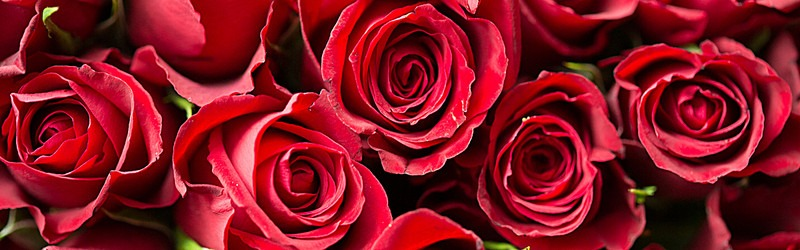 rozen suriname